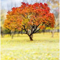 Красный цвет октября