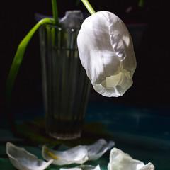цветы умирают красиво