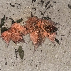 Ноябрьские следы