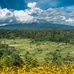 Дали острова Бали