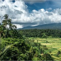 Склон вулкана. Индонезия.