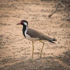 Сафари (2) по Национальному парку