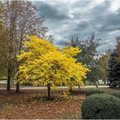 Осенние краски родного города