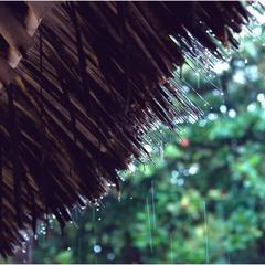 Тропический ливень...