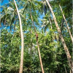 Охотник за кокосами