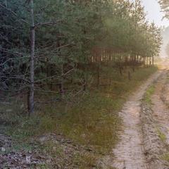 Утро в Таволжанском лесу.