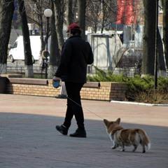 С собачкой можно... Киев. Весна 2020
