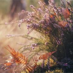 Осінньо-лісовий букет