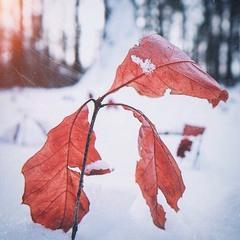 Зимові етюди