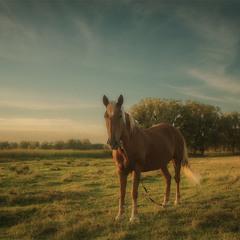 Лошадь, природы созданье чудесное