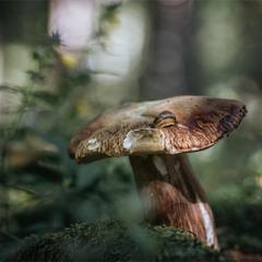 А я знаю хто понадкушував гриби