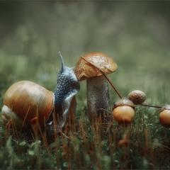Осінній равлик