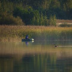 Ранкові рибалки