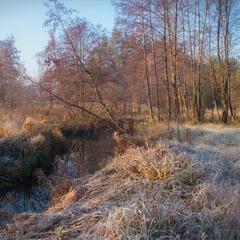 Ранкова прохолода