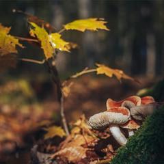В осінню пору