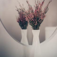 Засохлі квіти