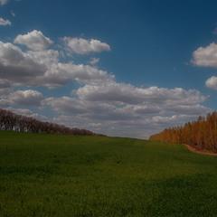 Українські поля