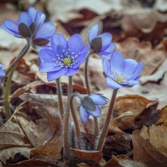 Дочекались.Весна