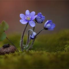 Весняні прикраси
