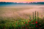 В ранковій тиші