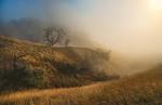 Слепящий туман...
