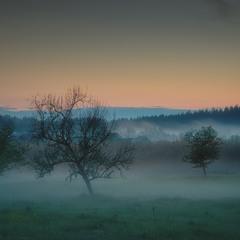 Туманный вечер в Подлимане