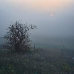 Ёжик. Солнце. Туман...
