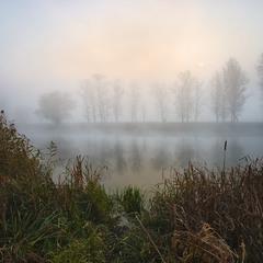 Туманная тишина...