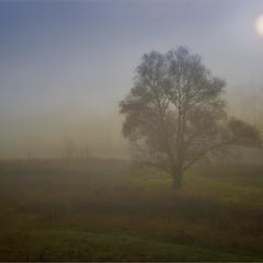 Солнце в тумане...