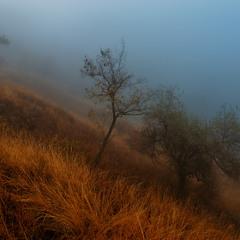 Туманные Кручи
