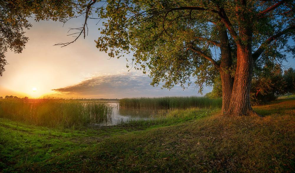 фотографий картинки тихого утра получается невероятно пышным