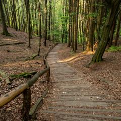 Лесными дорожками