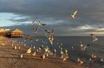 Золотые чайки Азова