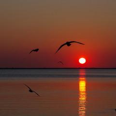 Кружили чайки на закате