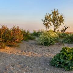 Растительность лиманов