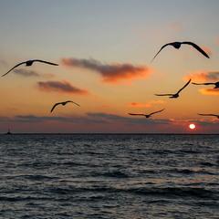 И снова чайки на закате солнца