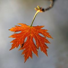 Весенний листик