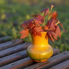 Весенние листики клена