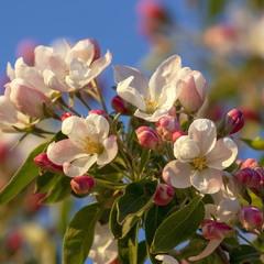 Вдыхая тонкий аромат цветков душистых