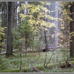 Там ще стояв могутній ліс...