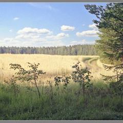 Під лісом, краєм поля...