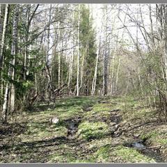 Навесні. Стара лісова дорога.