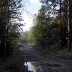 Стара лісова дорога