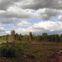 Ліс і люди.