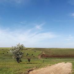 Дорога з Криничок в Новогригорівку.