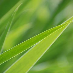 Молодо-зелено)