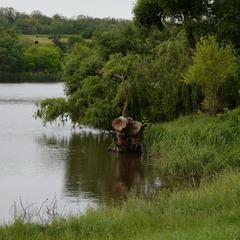 Рід: кікімори; вид: кікімора болотна:)
