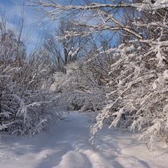Зимонька-зима