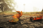 Все та же осень