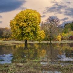 Осеннее половодье ...